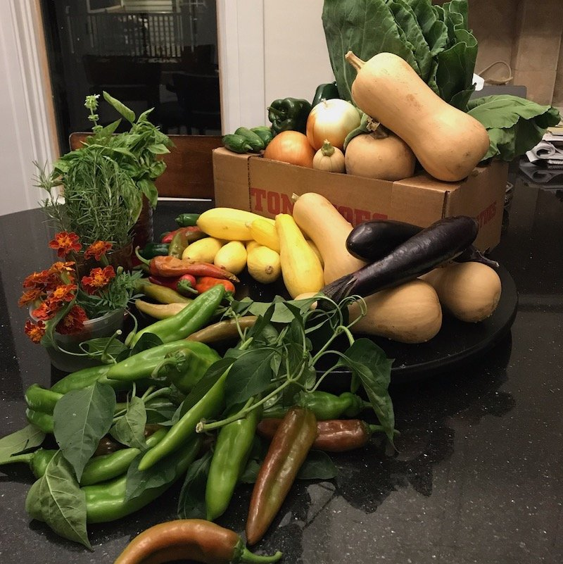 cornucopia of fresh vegetables